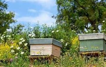 Apiculture / Déclaration des ruches 2018