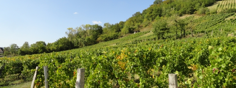 Agriculture / Viticulture / Environnement