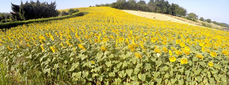 Agriculture, Viticulture et Environnement